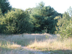 Photo of Woodcock Meadow